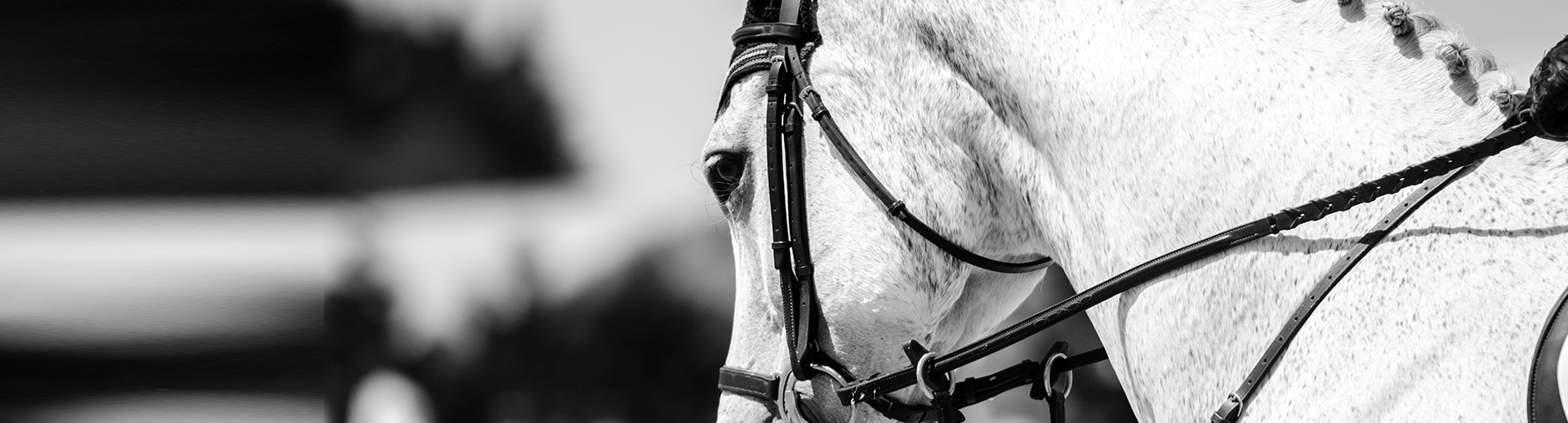 The Sport Horse Research Foundation