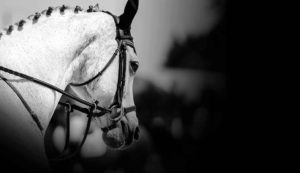 Image-Grey-Horse-Head-and-Neck-Braided